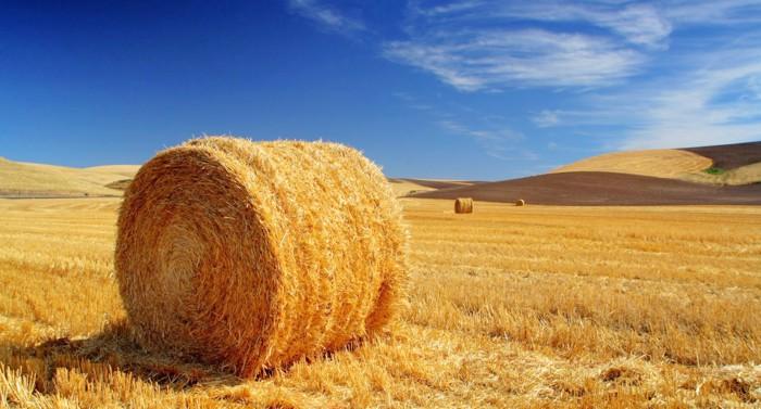 New-Methodology-regulatory-monetary-value-of-agricultural-land